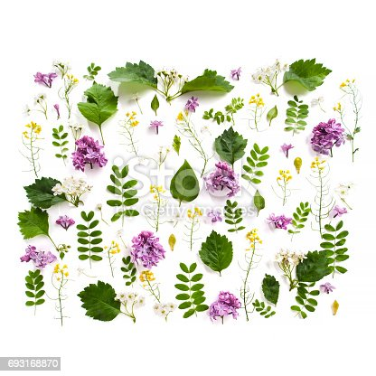 istock Various field plants and lilac flowers lined with a rectangle on a white background. 693168870