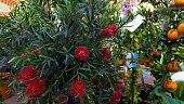 Various flowers and fruit trees presented for sale at market, gardening business