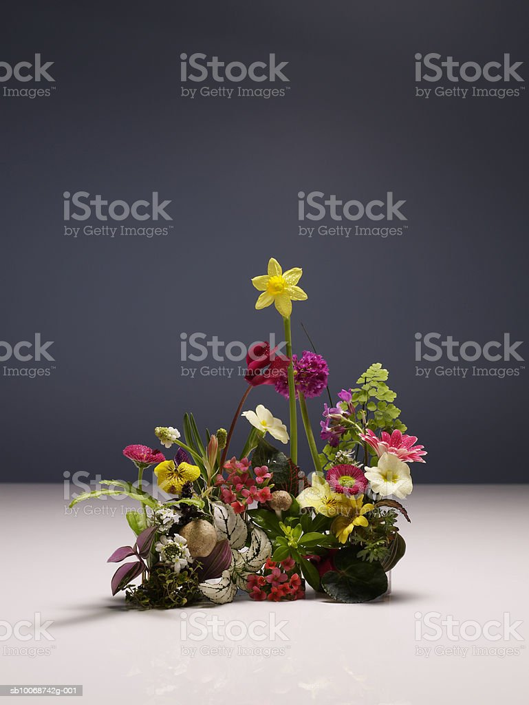 Various flowers on white floor, close-up royalty-free stock photo