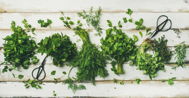 Various fresh green kitchen herbs Flat-lay of bunches of various fresh green kitchen herbs. Parsley, mint, dill, cilantro, rosemary, thyme over white wooden background, top view. Spring or summer healthy vegan cooking concept dill stock pictures, royalty-free photos & images