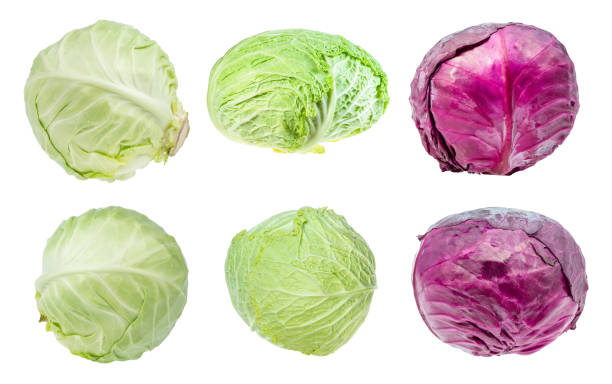 various fresh head cabbages cut out on white various fresh head cabbages cut out on white background cabbage stock pictures, royalty-free photos & images