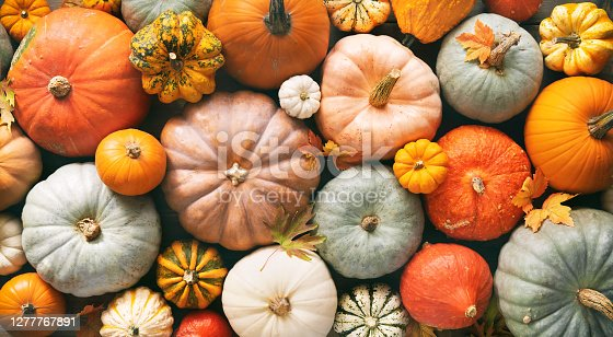 istock Various fresh ripe pumpkins as background 1277767891