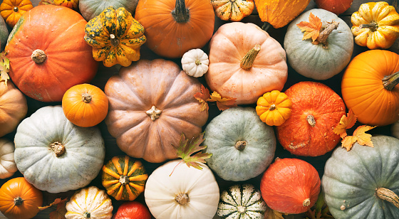 Various fresh ripe pumpkins as background, top view. Holiday decoration