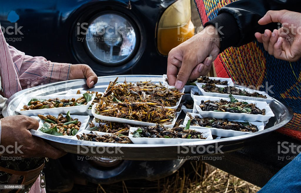 Various fried bugs stock photo