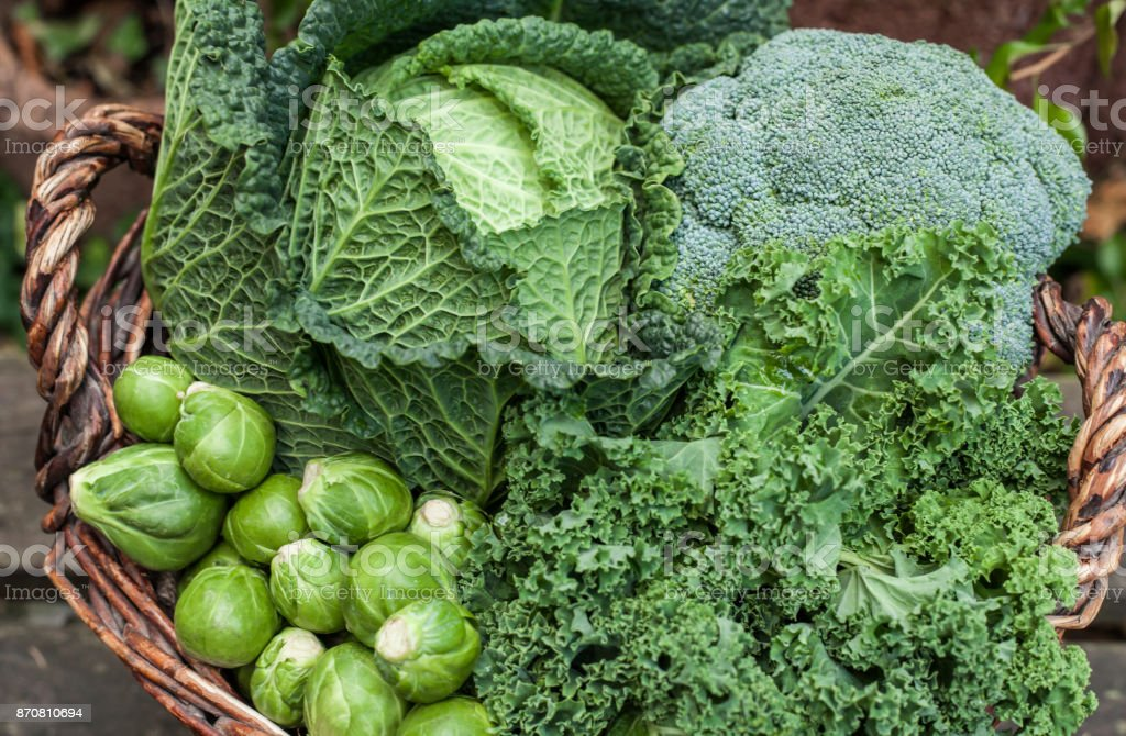 various green cabbages in basket winter Seasonal Vegetables on daylight stock photo