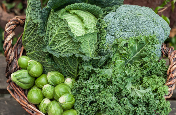 various green cabbages in basket winter Seasonal Vegetables on daylight - foto stock