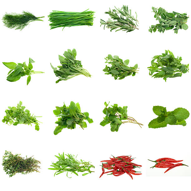 various herbs collection on a white background - tarragon stock photos and pictures