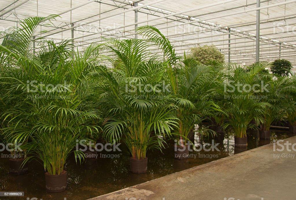 Vari houseplants in hydroculture semenzaio - Foto stock royalty-free di Affari finanza e industria