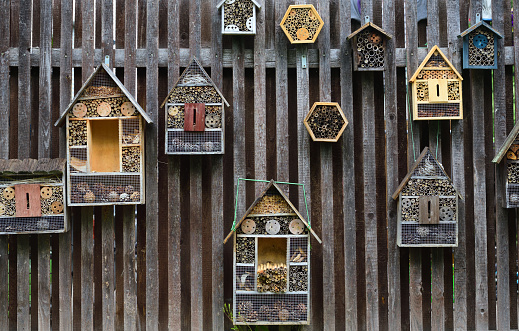 Various houses for insects hang on a wooden wall
