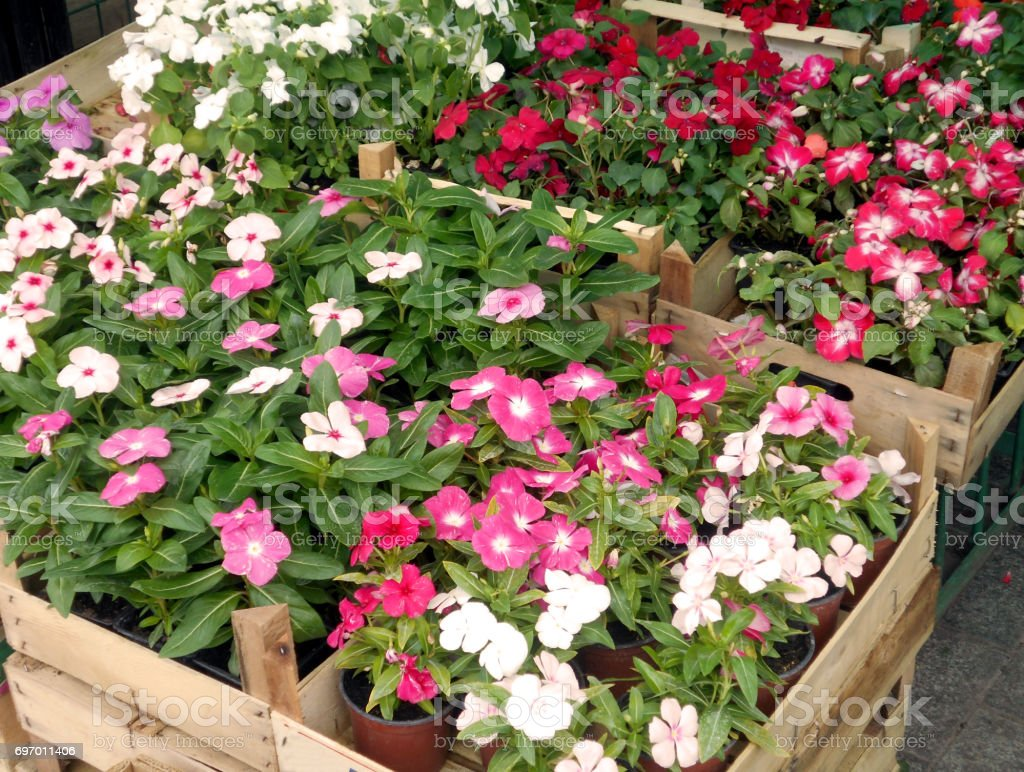 Various plants in wooden containers, on the flower market
