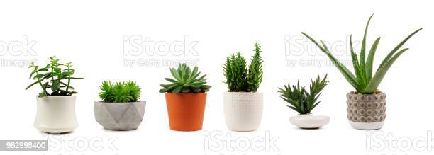 Photo of Various indoor cacti and succulents in pots isolated on white