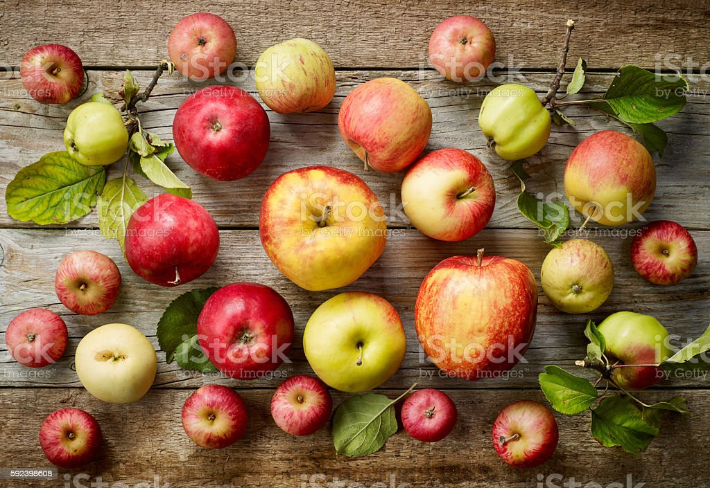various kinds of apples stock photo