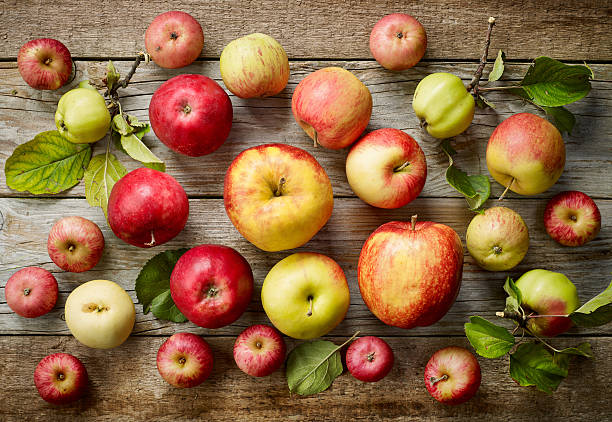 various kinds of apples - Photo