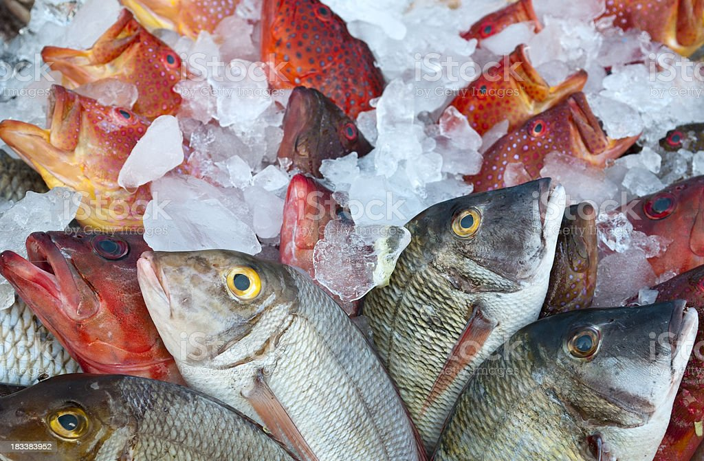 Grouper on ice royalty-free stock photo