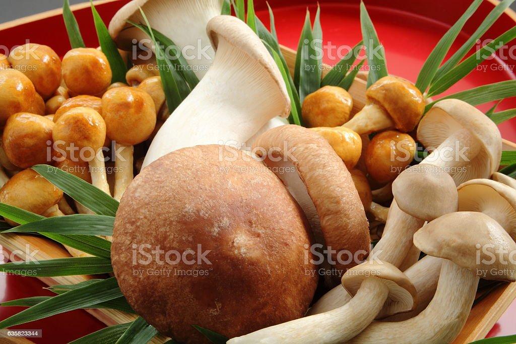 Various kinds of Japanese mushrooms stock photo