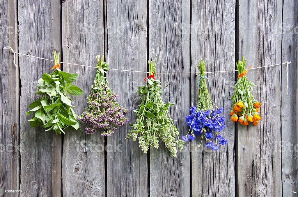 various medical herbs on wooden wall stock photo