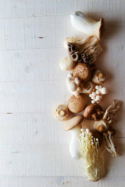 various mushroom - cogumelos imagens e fotografias de stock