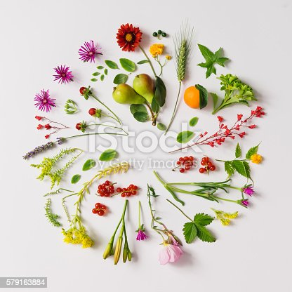 Various natural things neatly arranged in circle. Flat lay. Nature concept.