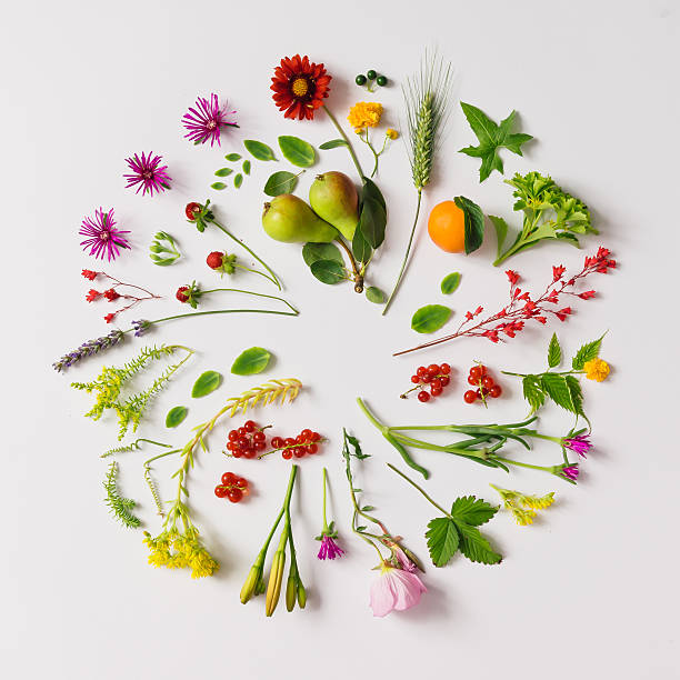 Various natural things neatly arranged in circle Various natural things neatly arranged in circle. Flat lay. Nature concept. knolling concept stock pictures, royalty-free photos & images