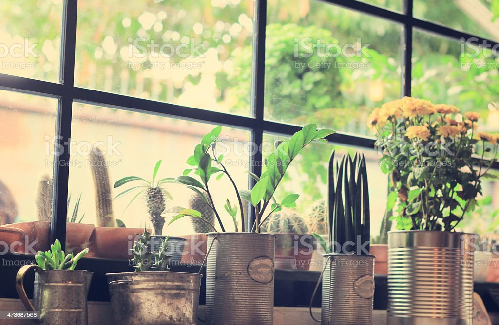 Various of cactus for decorated stock photo