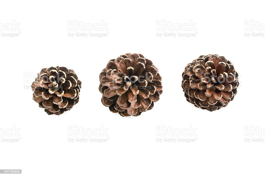 various pine cone trees isolated on white stock photo