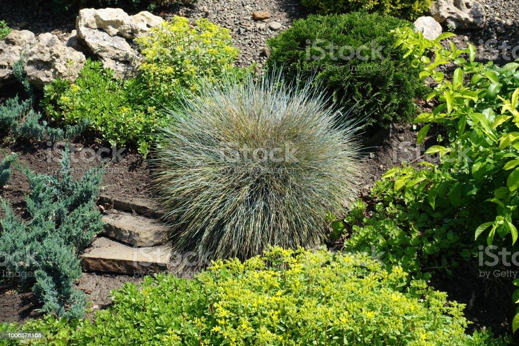 Photo libre de droit de Diverses Plantes Dans Le Jardin De Rocaille ...