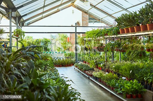 Variety of plants growing in garden center. Large group of pots arranged in plant nursery. Interior of greenhouse.
