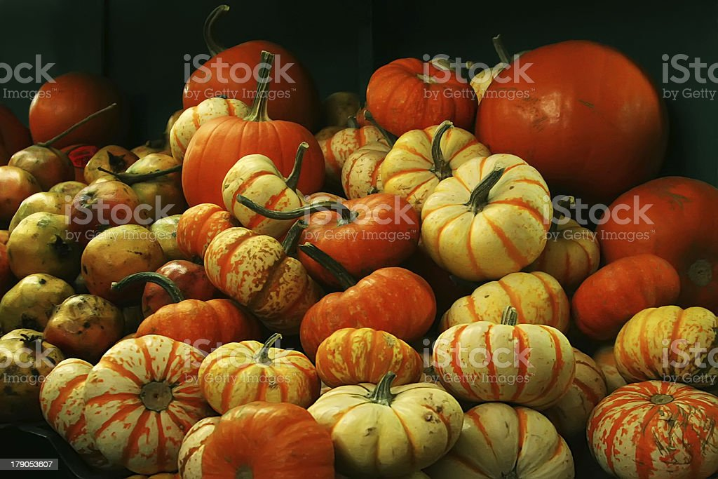 Various pumpkins autumn background royalty-free stock photo
