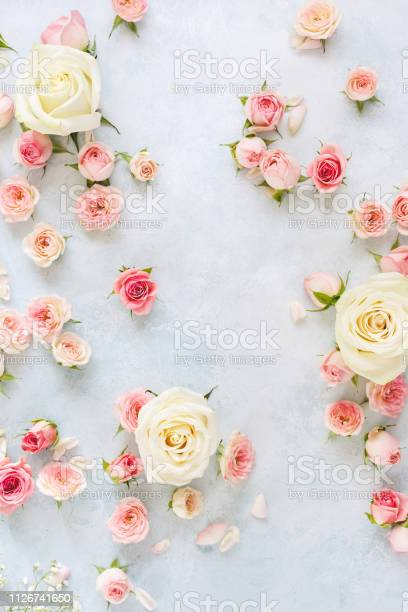 Various roses petals and buds on light blue textured background day picture id1126741650?b=1&k=6&m=1126741650&s=612x612&h=jogk5kbwhgj8dtkvjuxvknc9hz0depgkcn9qvw7xney=