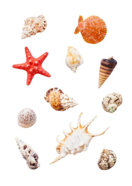 Verschiedene Muscheln – Foto