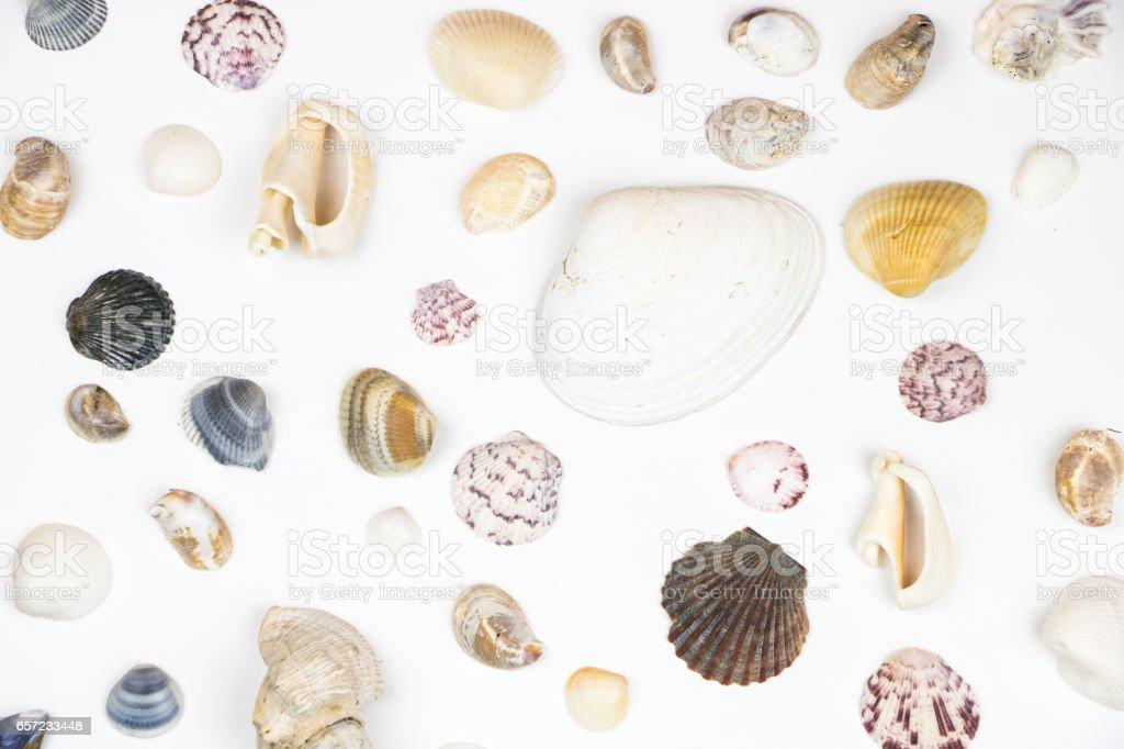 さまざまな貝殻が白で隔離 ストックフォト