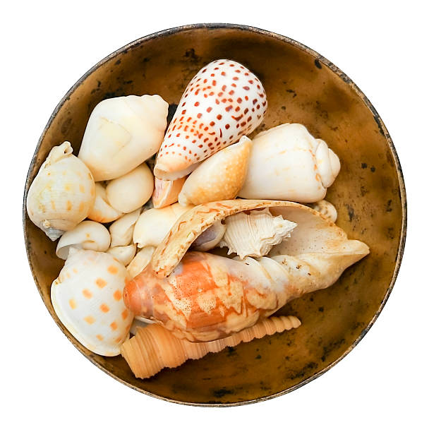 various shells in the bowl