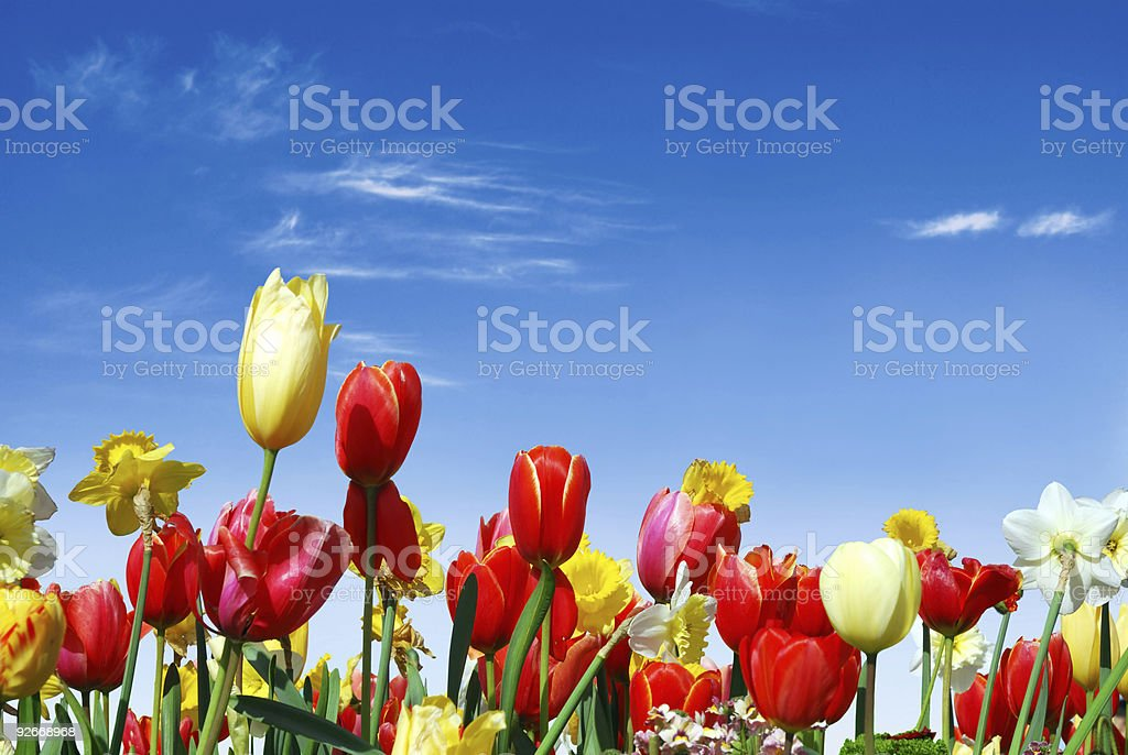 Various spring flowers towards the blue sky royalty-free stock photo