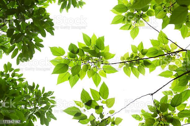 Photo of Various spring leaves on white background