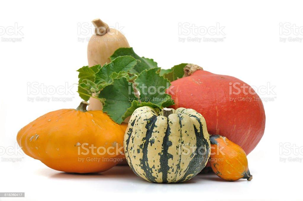 various squashes stock photo