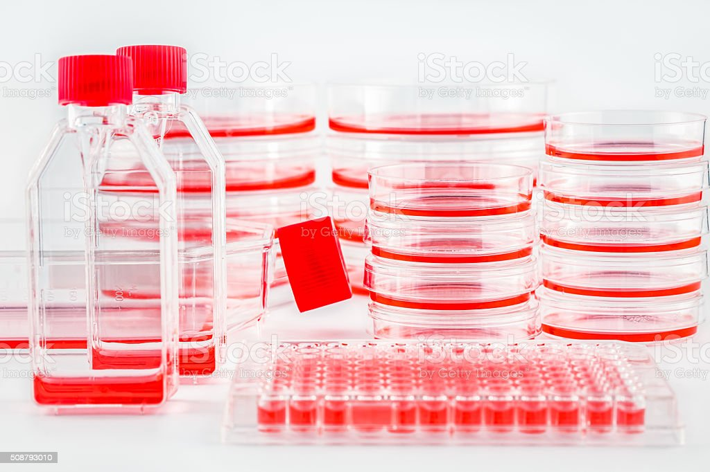 Various tissue culture dishes, flasks and plates stock photo