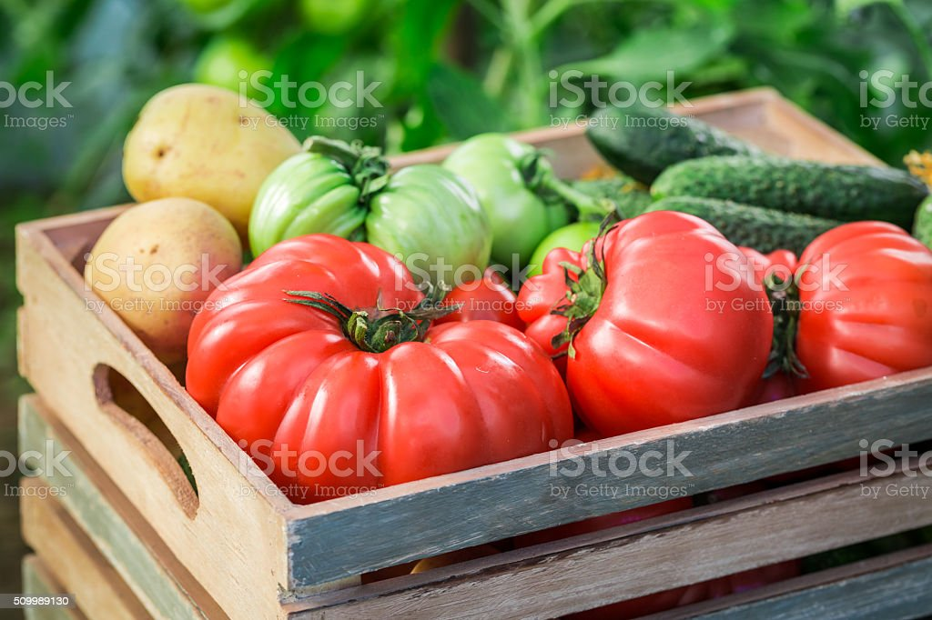 Various tomatoes and cucumbers to groceries stock photo