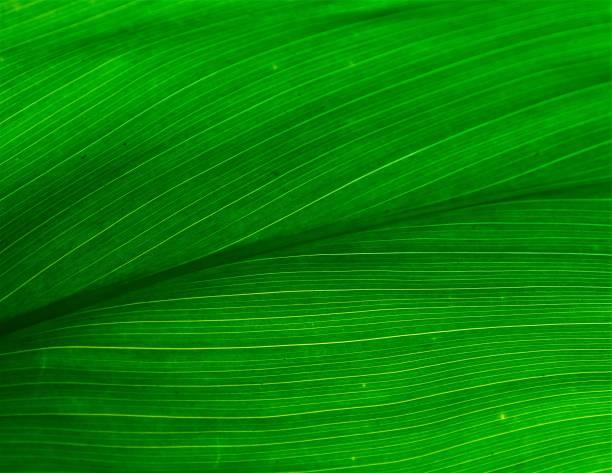 verschillende tropische planten, oahu, hawaii - pauwenkers stockfoto's en -beelden