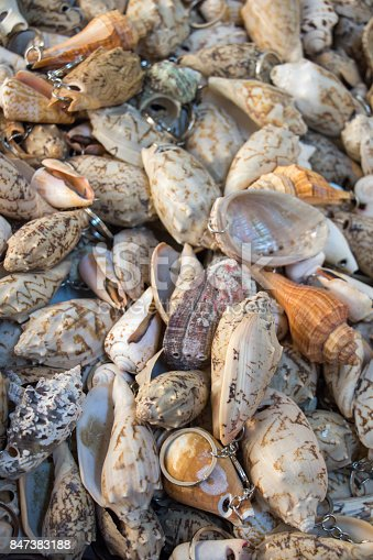 Various types of little colorful seashells