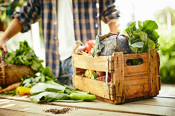 Various vegetables in crate at table in organic farm - foto de stock