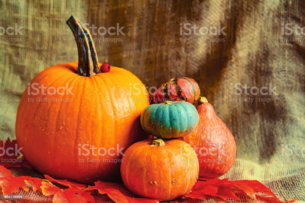 Variuos pumpkins on rustic background royalty-free stock photo