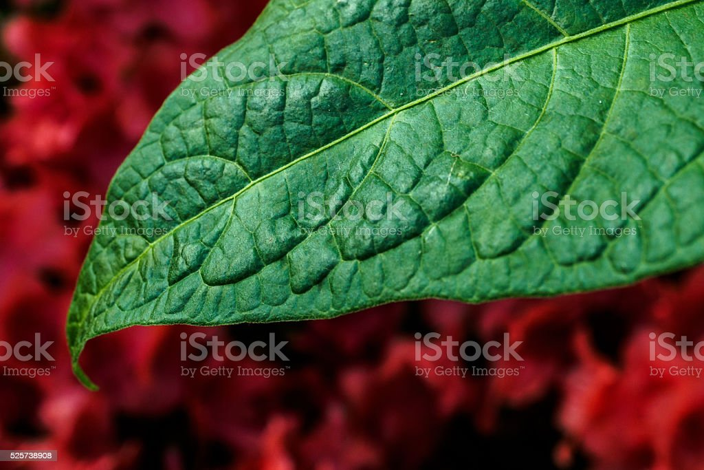 Vascular stock photo