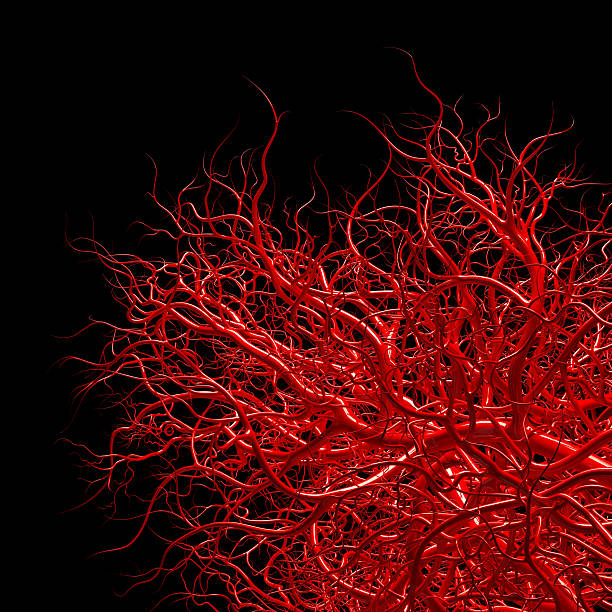 vascular system - blood vessels on black stock photo