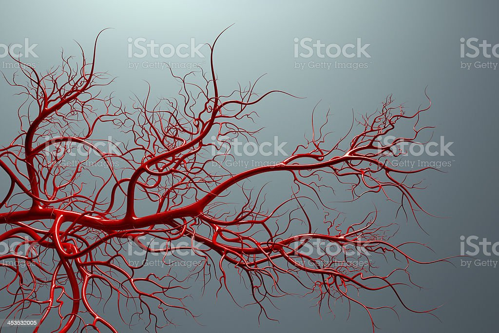 vascular system - veins full of blood stock photo