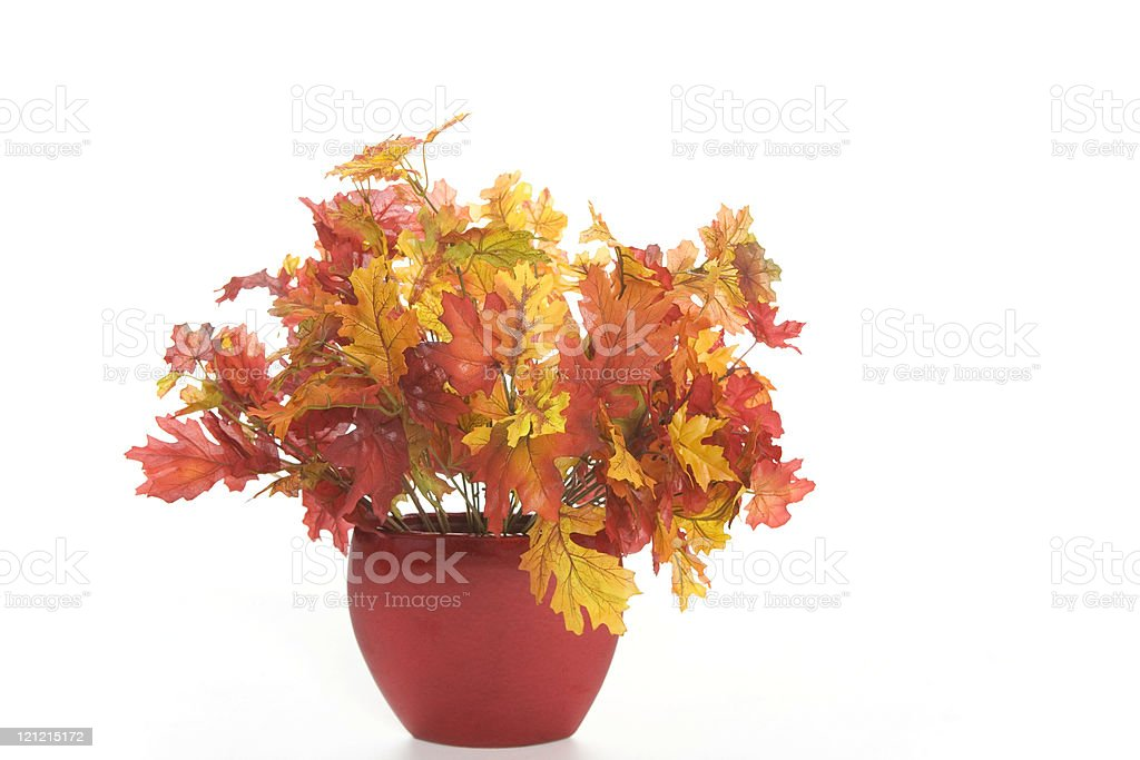 Vase of Autumn Leaves royalty-free stock photo
