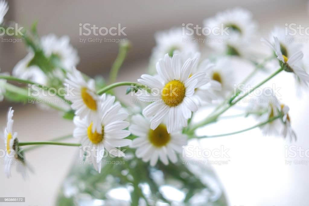 Vase of camomiles on blurred soft background. Soft focus flowers. - Royalty-free Beauty Stock Photo
