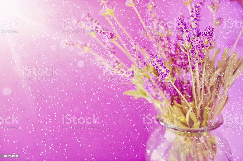 Vase of Lavendar Blossoms Being Showered by Morning Rain royalty-free stock photo