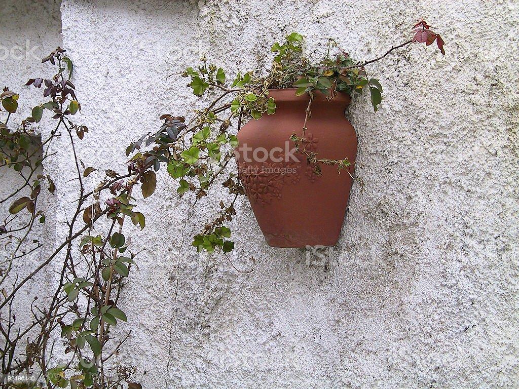 vase on wall royalty-free stock photo