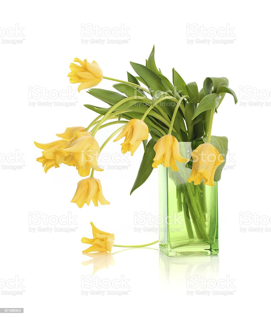 vase royalty-free stock photo