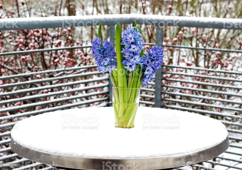 glass vase with three blue hyacinths standing outdoors on a balcony...
